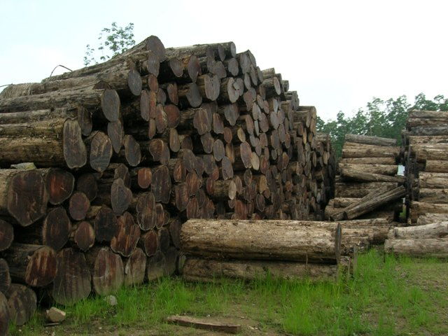 legal teak logs stacked in myanmar for teak decking