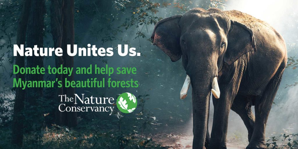 The Nature Conservancy work in Myanmar timber elephant