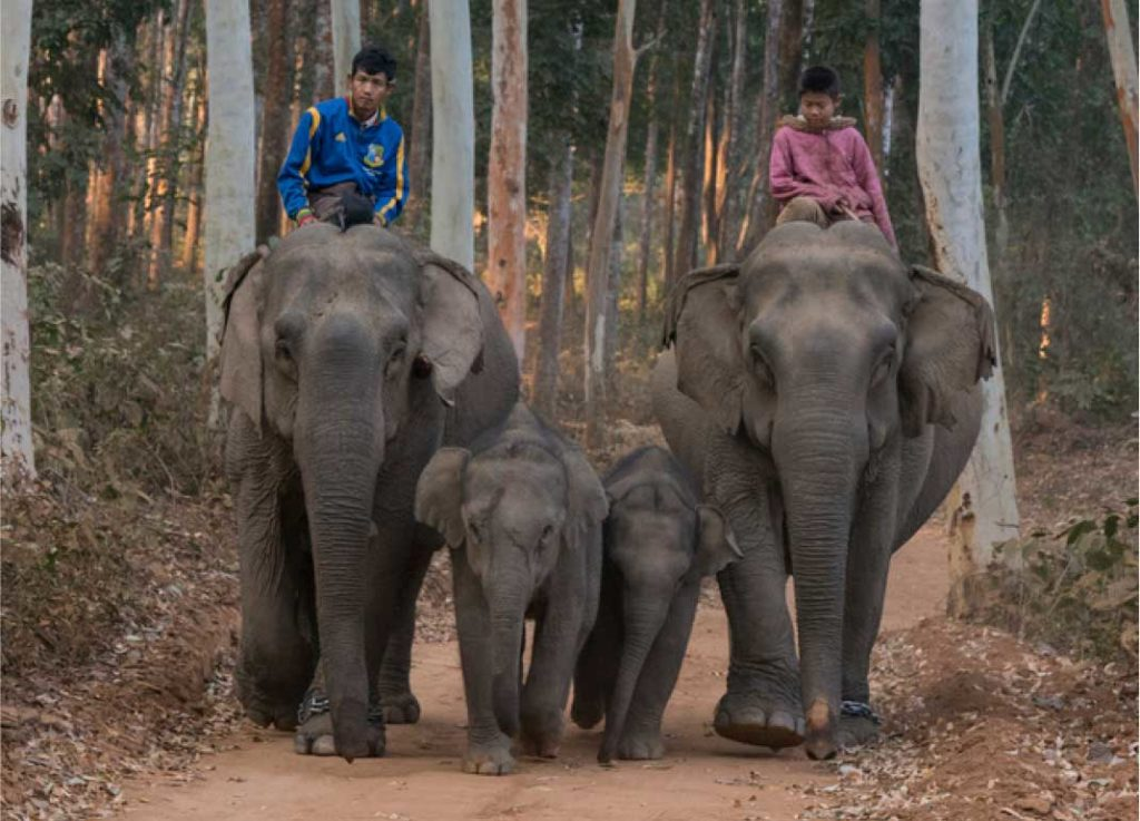 Myanmar Timber Elephant with Mahouts